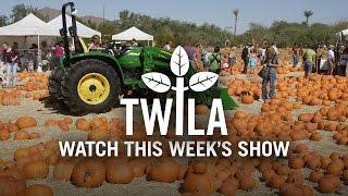 TWILA -- October 21, 2016