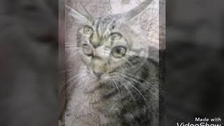 Ася/прикольные фото//cat love//