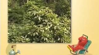 Настоящий хозяин. Цветущие газоны, уход и выращивание газонов. борьба с насекомыми-вредителями