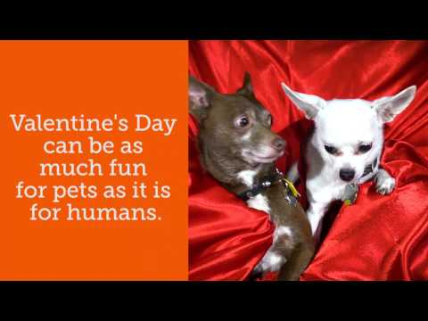 Pet Planet - Valentine's Day Safety Tips From The ASPCA!