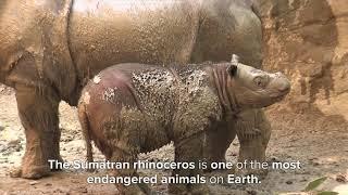 Endangered Species Day - Cincinnati Zoo