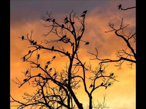 Mc Pfoane -vogel in de boom