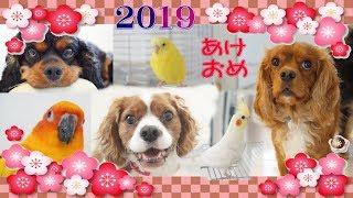 あけましておめでとうございます。 今年もどうぞよろしくお願いいたしま...