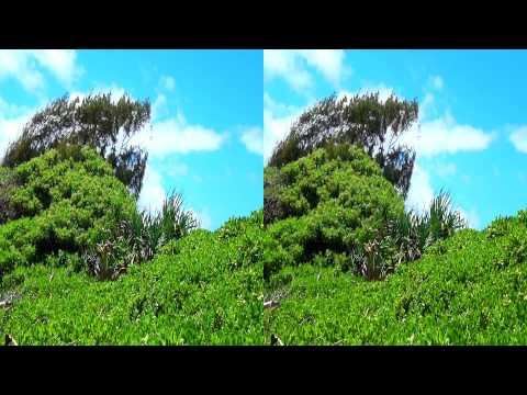 3D Blue Skies Beach Scene Hawaii FREE 3D Video Everyday N°25