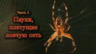 Часть 3. Пауки, плетущие паутину