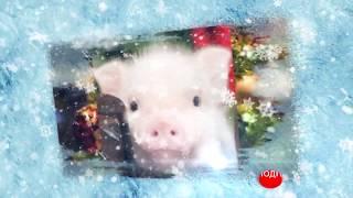 Поздравление С Новым 2019 Годом Свиньи. Веселое Видео