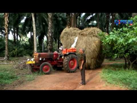 Successful organic farming in oilpalm and coconut by GVSR Prasad - Express TV