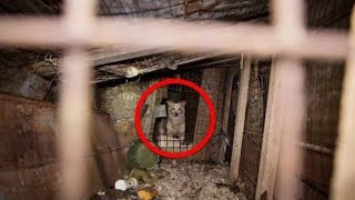 These Desperate Animals Just Got Saved From Terrible Cruelty  And The Rescuers Weren't Done Yet