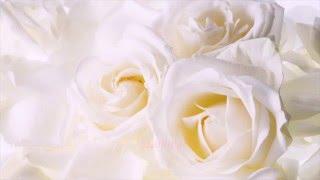 Ичня фото Свадьба слайдшоу презентация(фотокниги, фотоальбомы, виньетки, планшеты, видео фото съемка и.т.п., 2015-12-04T14:39:36.000Z)