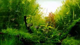 Aqua Forests in Fish Tanks
