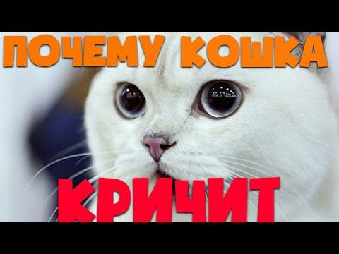 Почему кошка кричит или громко мяукает | Причины крика у кошек | Кошка кричит ночью
