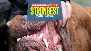 Top 10 Dog Breeds with the Strongest Bite Force