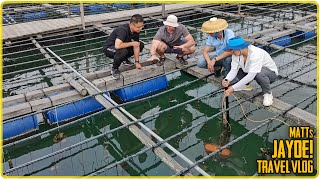 Oyster Farm Live Stream Behind the Scenes