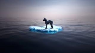 Hund mitten im Eismeer entdeckt - dann wird es lebensgefährlich!
