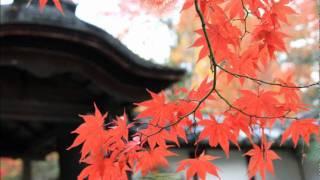 日本昔話にも出てくる一休さんが晩年を 過ごされたお寺の紅葉も盛りにな...