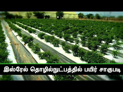 நிலப் போர்வையில் குளிர்காயும் செடிகள் - | Indo Israel Planting technology in Dindigul, Tamilnadu