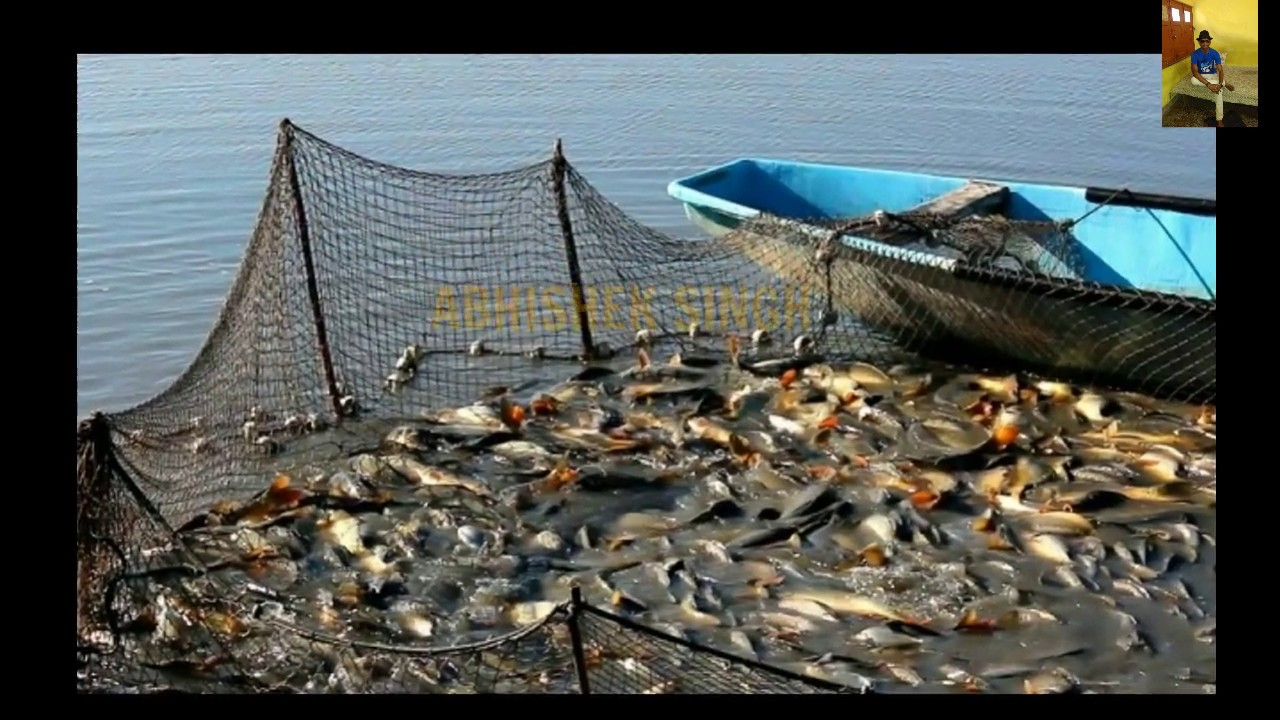 How to start fish farming in hindi for How to start fish farming