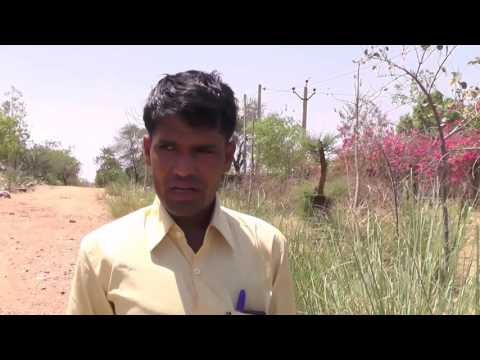 Turning Deserts into Forests in Rajasthan, India