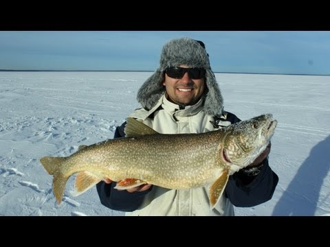 Ice Fishing for Lake Trout in Cold Lake Alberta
