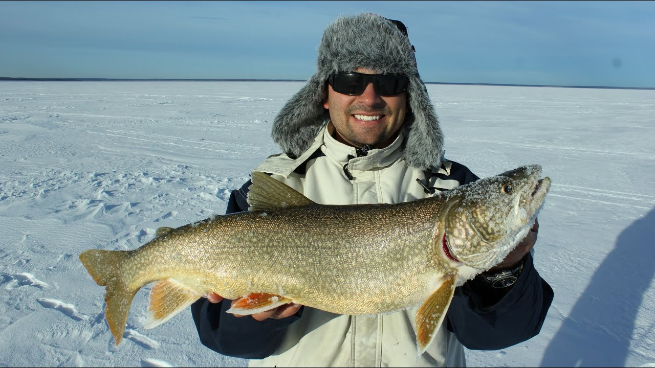 Ice fishing for lake trout in cold lake alberta youtube for Ice fishing for trout