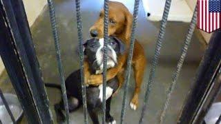 Zdjęcie obejmujących się psów ratuje im życie