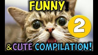 Tiger Funnies - You Will Laugh Till You FART - World's FUNNIEST Compilation - Tiger Funnies