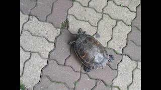 거북이랑 조용히 산책하는 영상