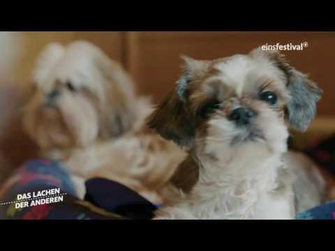 Das Lachen der Anderen: Tierliebhaber ARD Doku in Einsfestival