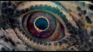 Voyage Of Time (Trailer CPH:DOX 2017)