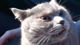 Кот после кастрации, еще под наркозом!