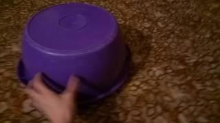 Прикол! Смешное видео о забавных домашних животных. Миска двигается по ковру