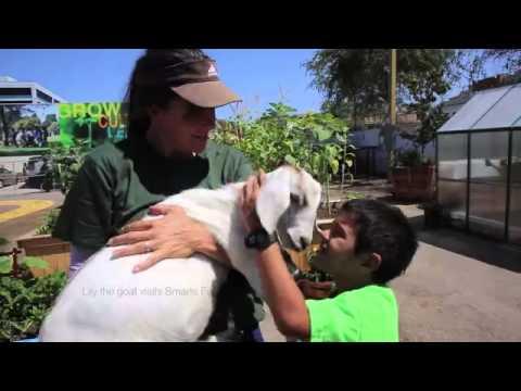 taj farm's lilly the goat visits smarts farm in san diego 640x360