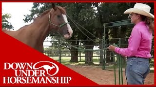Clinton Anderson: More Horse Than Handle, Part 1  Downunder Horsemanship