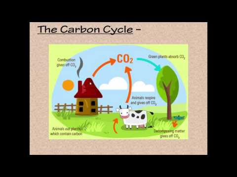 Nutrient Cycles Notes