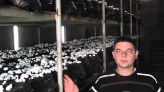 Как заработать на грибах в домашних условиях в промышленных масштабах.1-я часть.(В этом ролике я рассказываю о шампиньонах, как о прибыльном бизнесе Постоянная ссылка на этот ролик:https://youtu..., 2015-11-11T05:59:33.000Z)