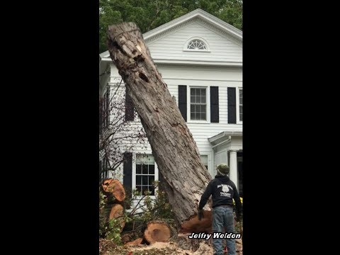 Big Timber Comes Down On Paddock Street Watertown New York