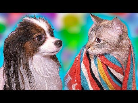 24 ЧАСА говори ДА! 2 часть / Веселый ЮКИ и кот Сеня КУПАЮТСЯ вместе!