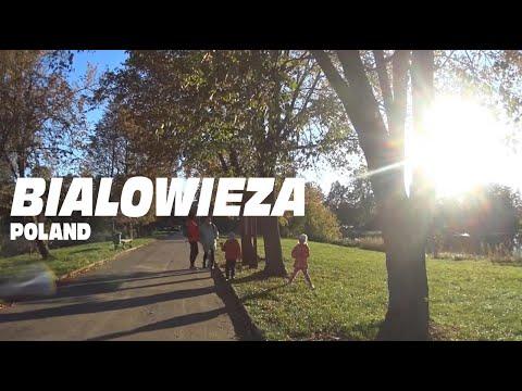 Bialowieza primeval forest & village, Poland. Europe's last wilderness.