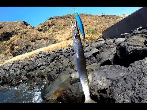 spinning barracuda