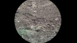 Benjamin Marauder .22 - Part 2 - 110 Yards Scopecam