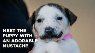 Meet the puppy with an adorable mustache