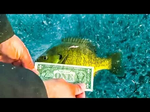 Ice Fishing Pan Fish Blue Gills, Crappies, and Perch on Minnesota Lakes