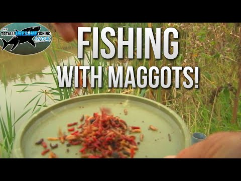 How To Catch Fish With Dead Maggots   TAFishing