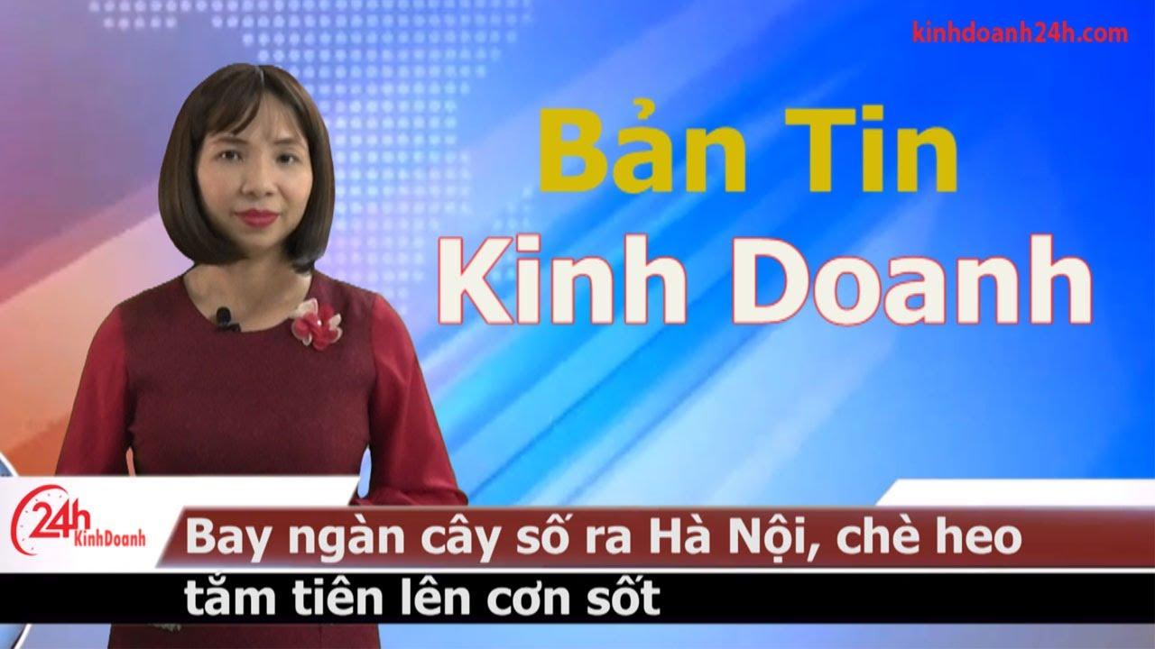 Bản tin kinh doanh hôm nay – Bay ngàn cây số ra Hà Nội, chè heo tắm tiên lên cơn sốt – Kinhdoanh 24h
