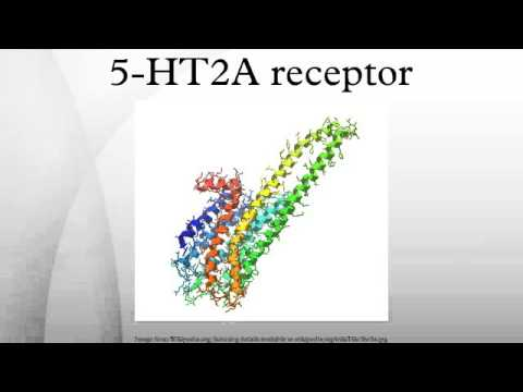 5-HT2A receptor