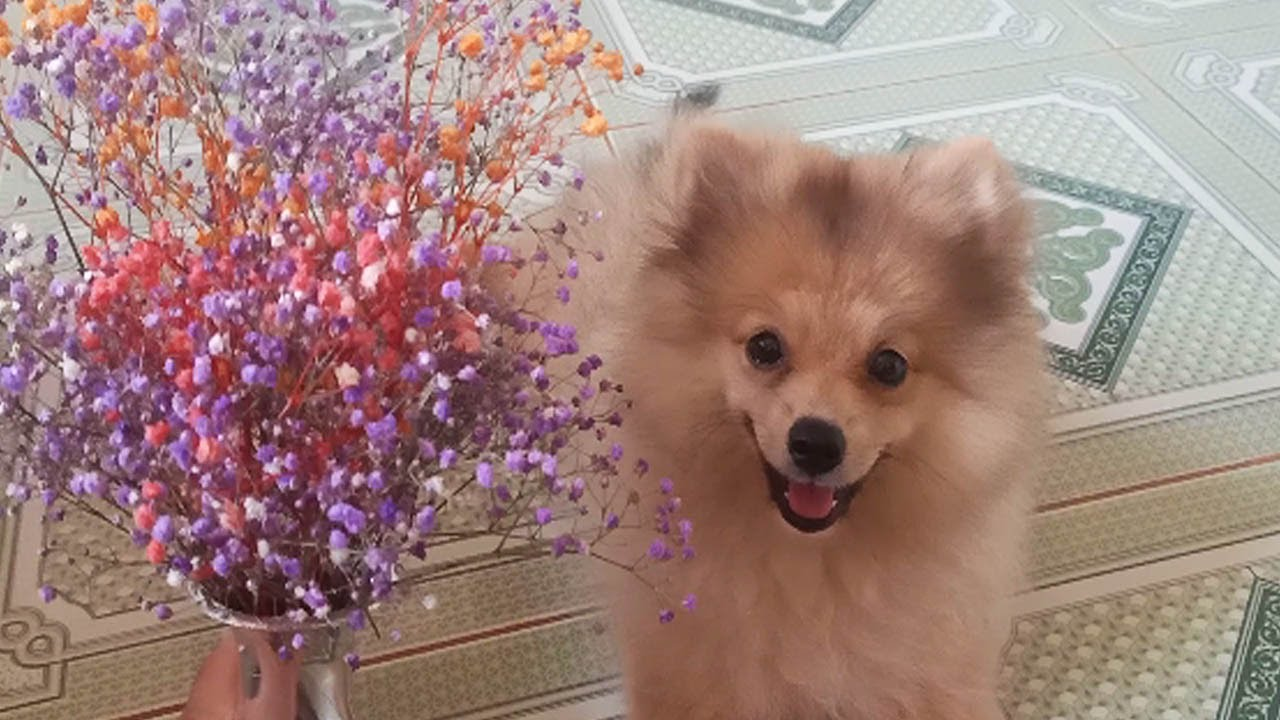 Flowers and Puppy. She Lover flowers  ? She take photo with flowers Looks like pretty.