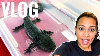 Nashville Exotic Pet Expo - Vlog 13