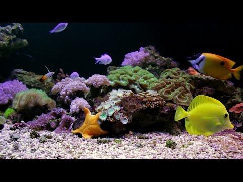 4k hd amazing goldfish - photo #45