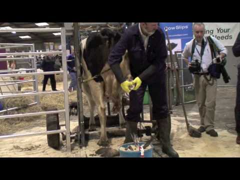 Hoof Trimming at Agri Scot (part 2)
