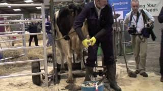 Hoof Trimming at Agri Scot (part 2)